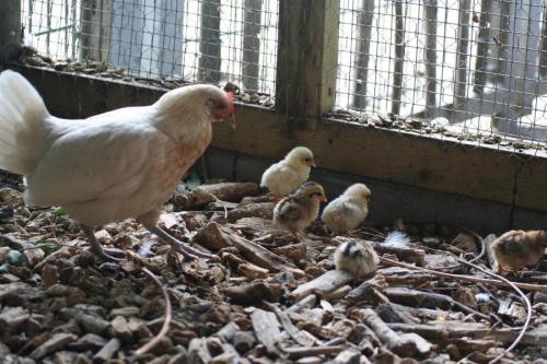 kinderboerderij voorhout 11