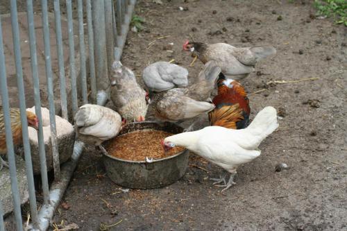 kinderboerderij voorhout 14