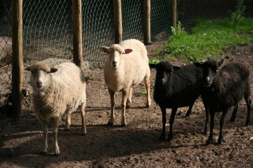kinderboerderij voorhout 3