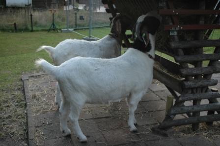 website geiten
