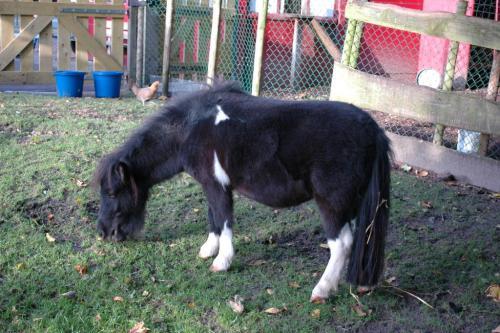 website pony
